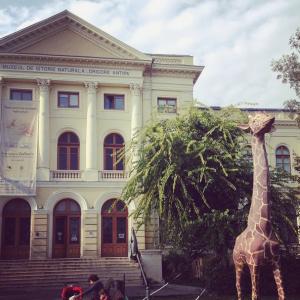 muzeul-antipa